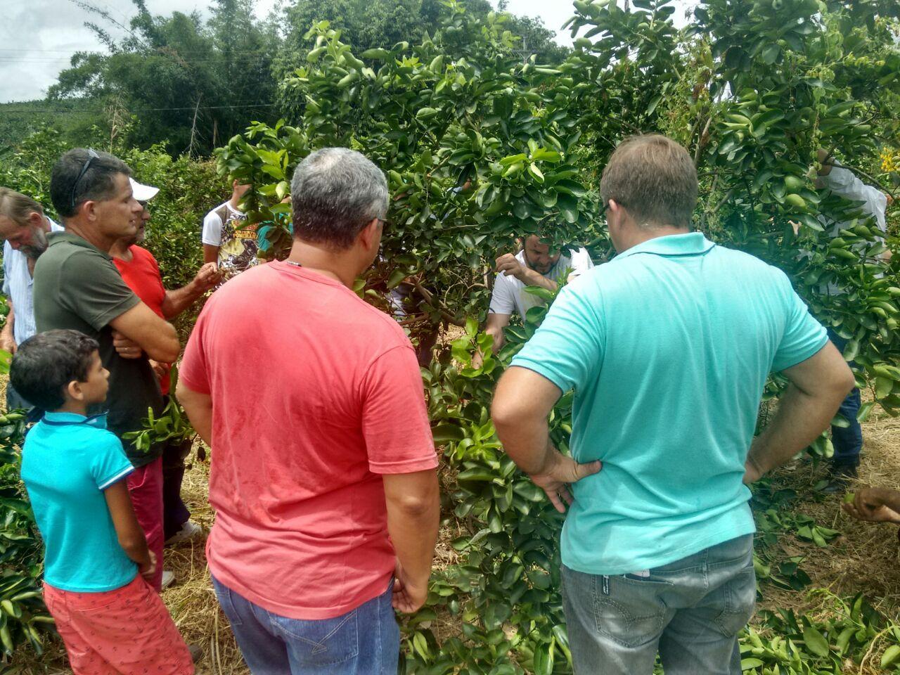 Produtores participaram de capacitação sobre o cultivo do limão tahiti
