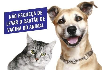 Campanha de vacinação antirrábica animal 2020 vai até o dia 24 de outubro